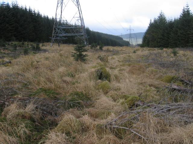 Power line forest break