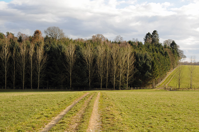 Farm Track and Wood South of Blackpark Farm