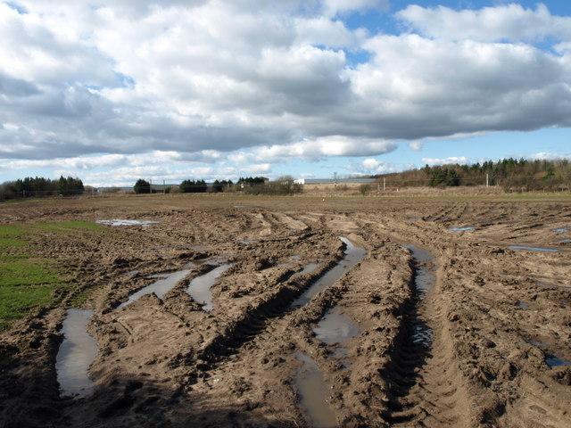 Field Tractor Tracks, Ardreer