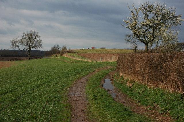 The Severn Way near Clifton