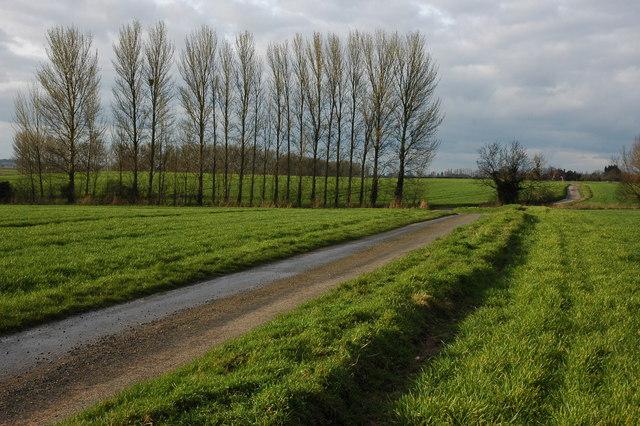 Road through Birch Green