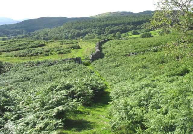 Bracken-infested sheep pastures