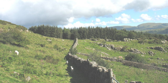Rough grazing and forest plantation west of  Ystumgwadnaeth