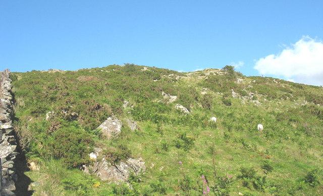 Hillside above Ffridd Carmel
