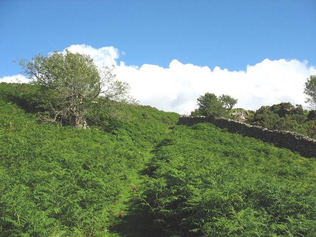 Footpath climbing bracken covered hillside