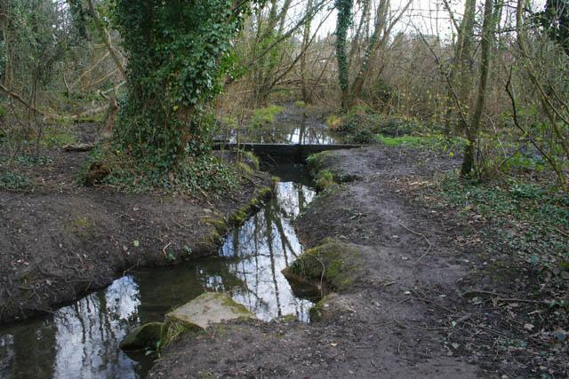 A walk through Harrison's Plantation (3)
