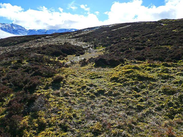 Moorland and bog