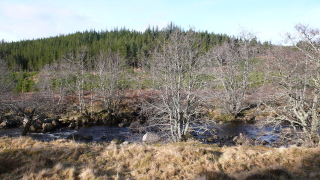 Mixed woodland, Strath Rannoch