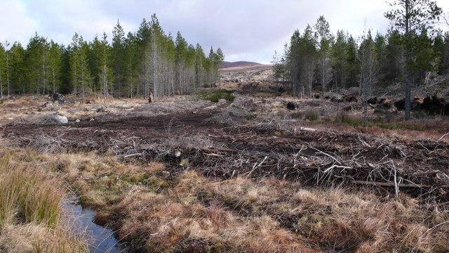 Forest harvesting, Strath Rannoch