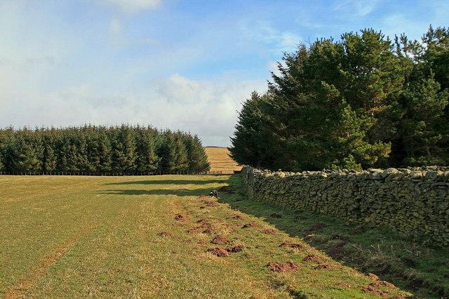 Two plantations, north of Wedderlie