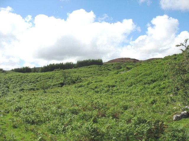 View across bracken covered hillside towards the forest