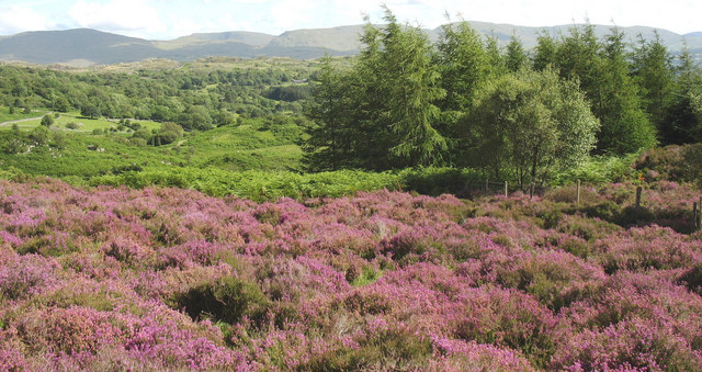 An easterly view across heather and bracken to the  valley of Afon Babi