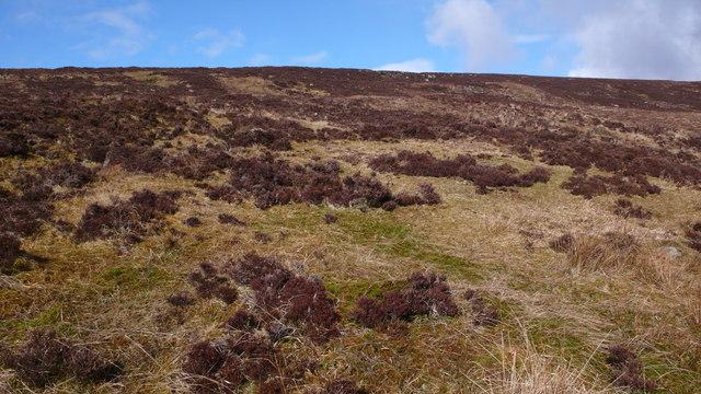 Rough moorland, Carn Mor