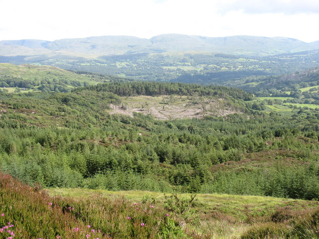 Harvested section of the Glasgoed Forest