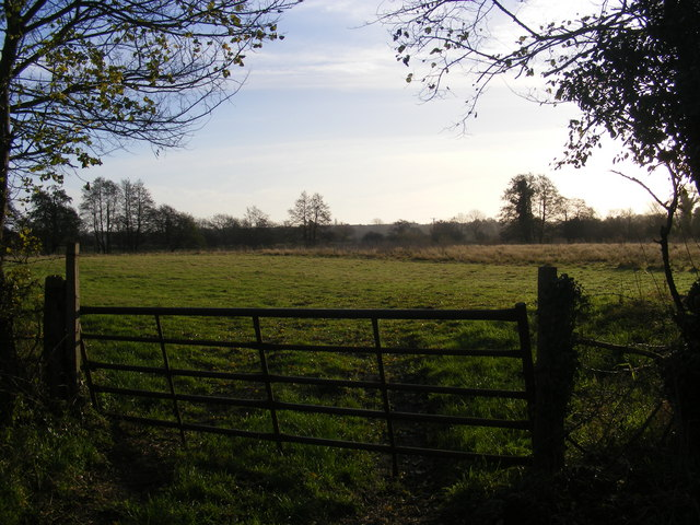 Earsham, meadows
