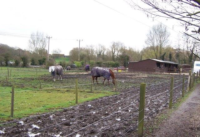 Muddy Paddock-Titchfield
