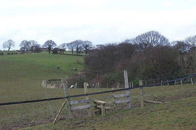 Reinstated field below Beldon Pond