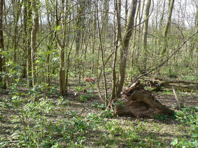 Woodland near Lynsted