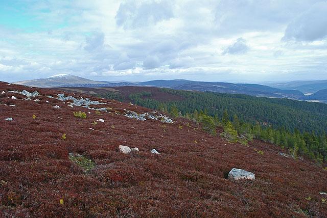 Forest above Coilacriech - 2