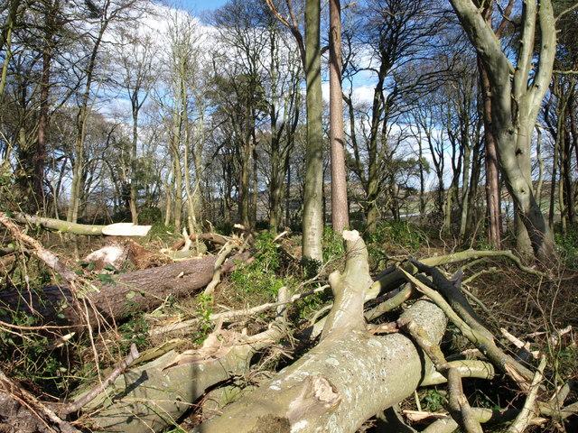 Woodland, Hunterston