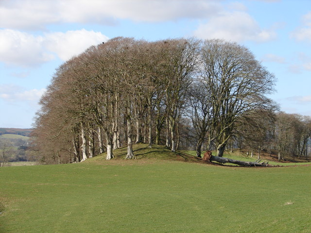 One Tree Short of a Copse