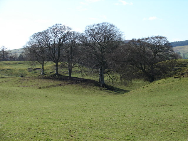 Trees and Mounds
