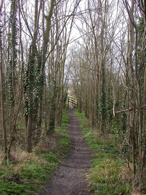 Bridleway through woods