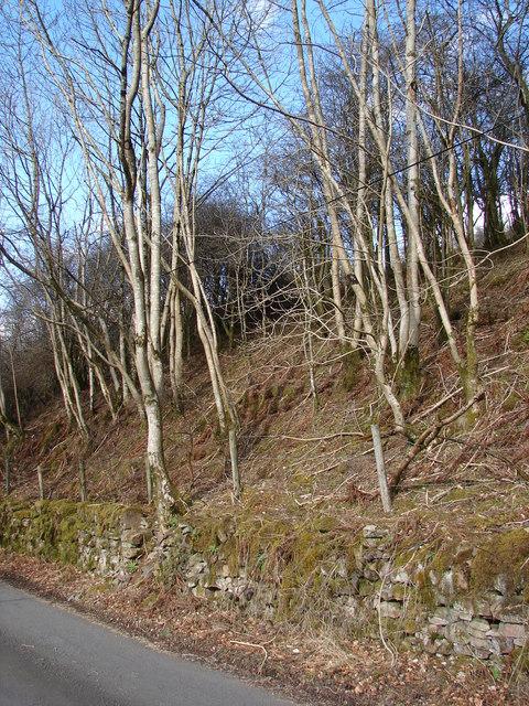 Birch Embankment
