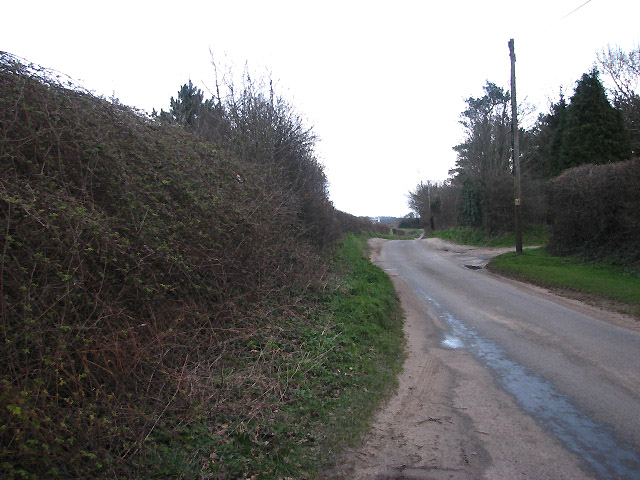 Hedge-lined country lane