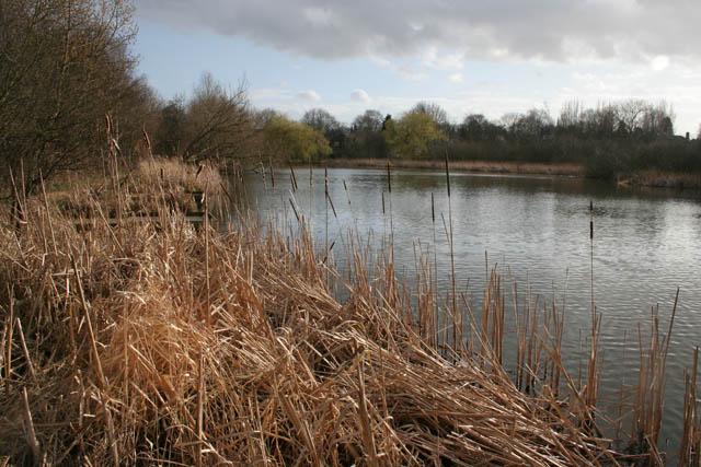 A walk round Martin's Pond (5)