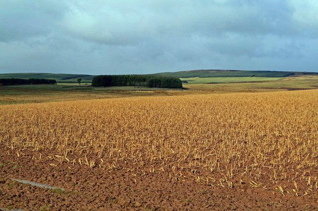 Stubble field, Wedderlie