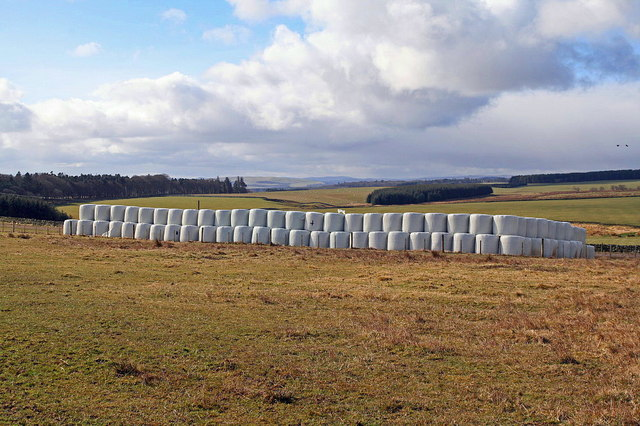 Plastic-wrapped bales, Wedderlie