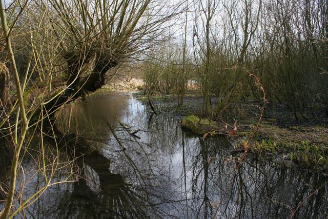 A walk round Martin's Pond (6)