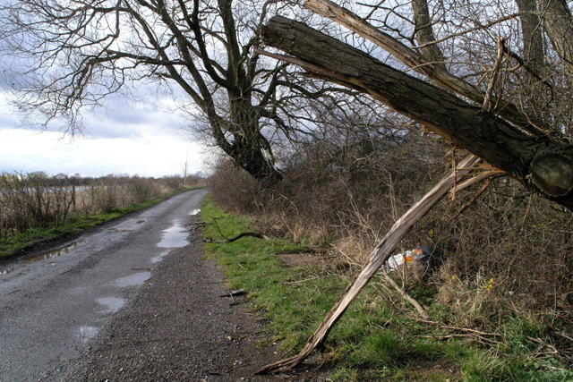 Broken Willow on Warren Lane