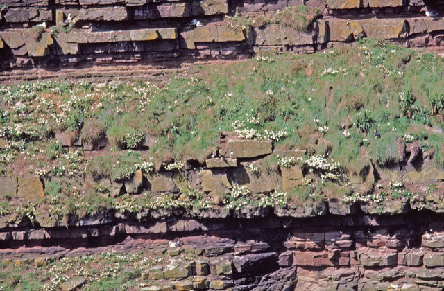 Rock Strata Geo of Sclaites, Duncansby, Caithness