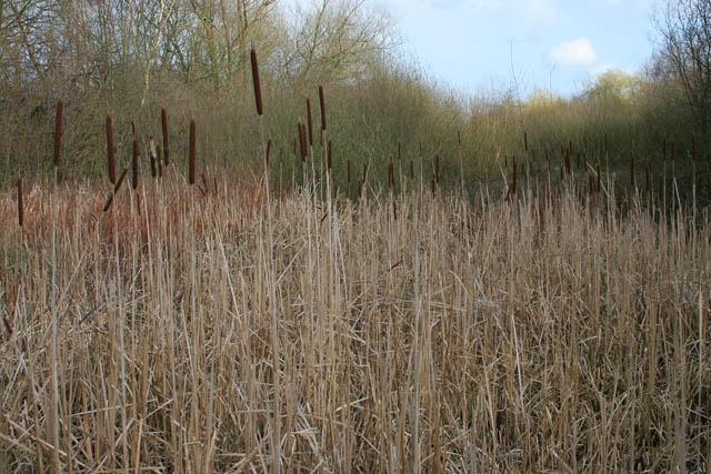 A walk round Martin's Pond (11)
