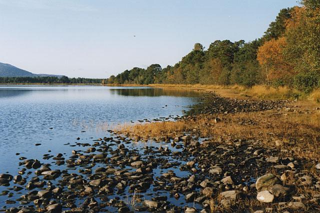 Loch Morlich shoreline