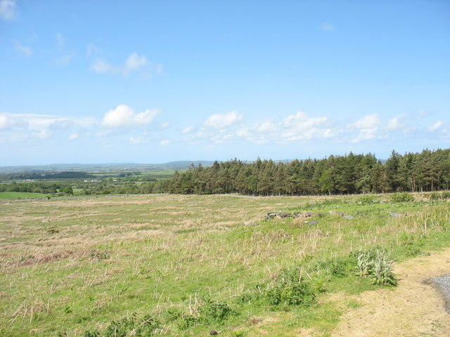 View across sheep pastures to the Coed Rhiwlas forest