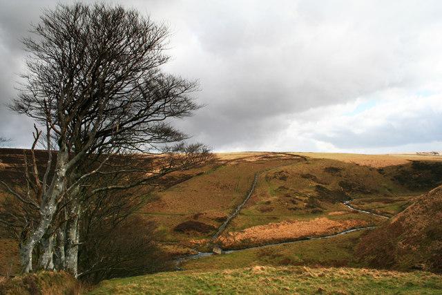 Toms Hills Barrows Exmoor