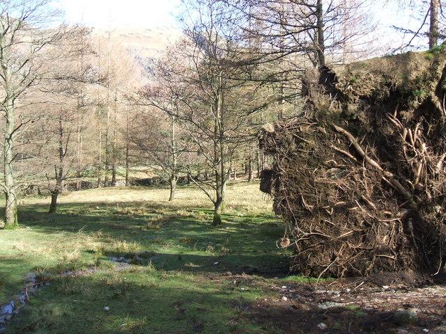 Woods in Langdale