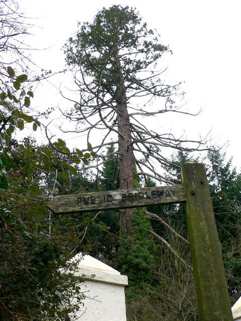 Bridleway towards Finlake