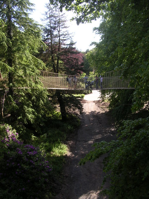 Rope suspension bridge leading to the tree house at Alnwick Garden