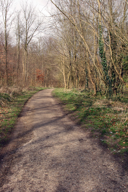 The Track through Millington Woods