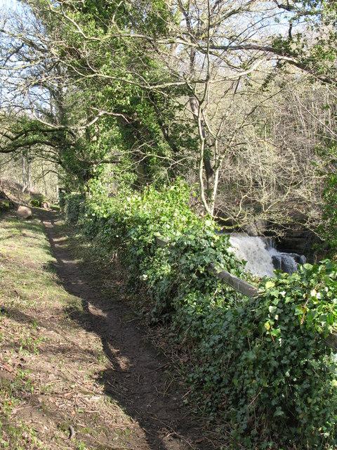 Footpath alongside Rookhope Burn near the waterfall