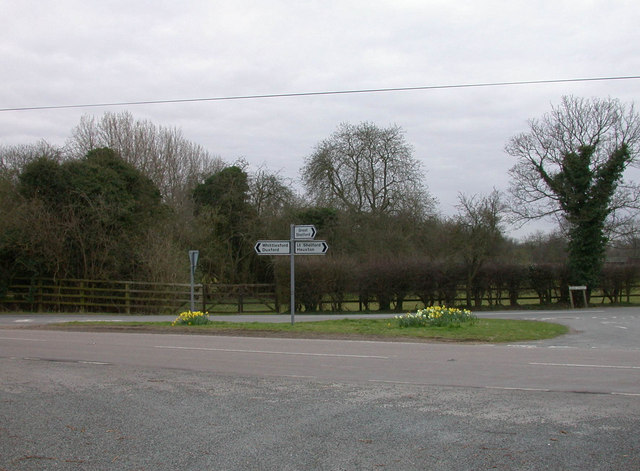 Daffodil Junction