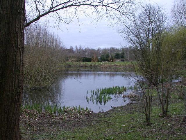 Pond near Little Shelford
