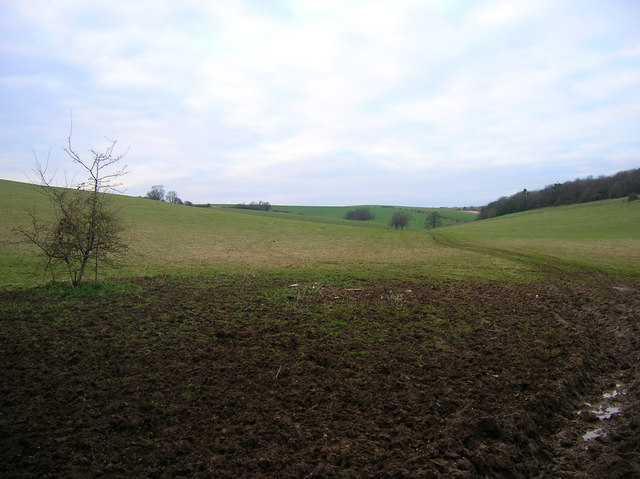 Downland South of St Mary's Farm