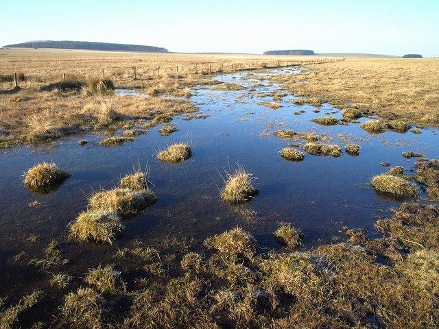 Crowdy Marsh