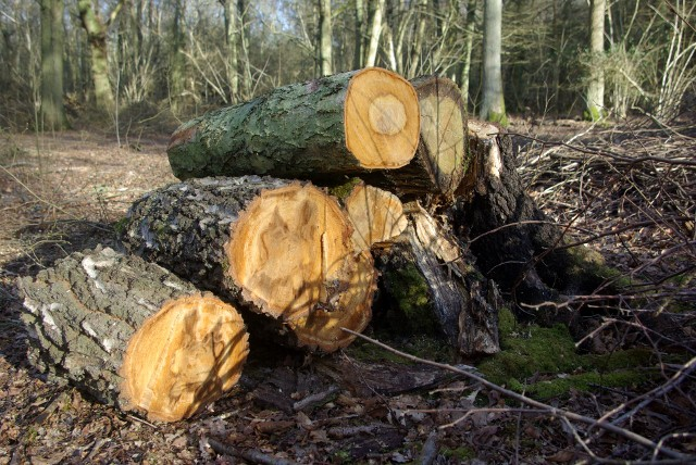 Woodpile in Ryton Woods