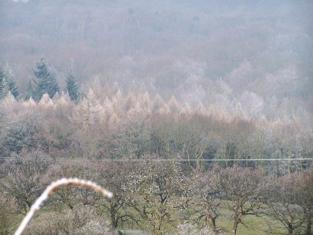 Hoar Frost on the tops of the trees, near Oughtibridge